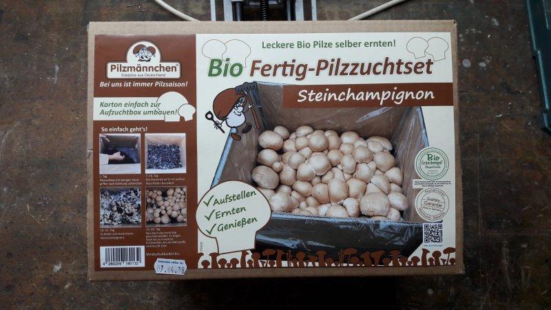 Dieses Bio Fertig-Pilzzuchtset mit brauen Champignons teste ich jetzt mal