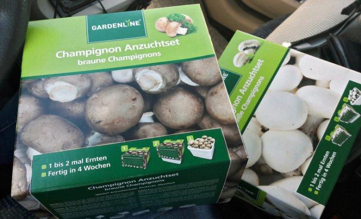 Die muss ich einfach testen: Champignon Anzuchtsets von Aldi