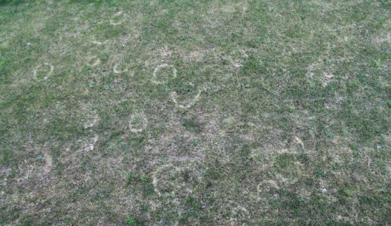 Zahlreiche Kreise zieren nach dem langen Winter den Rasen.
