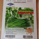 Capsicum spp - grüner Hot Pepper